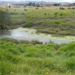 Humedal de Capellanía