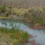 Humedal Tunjo